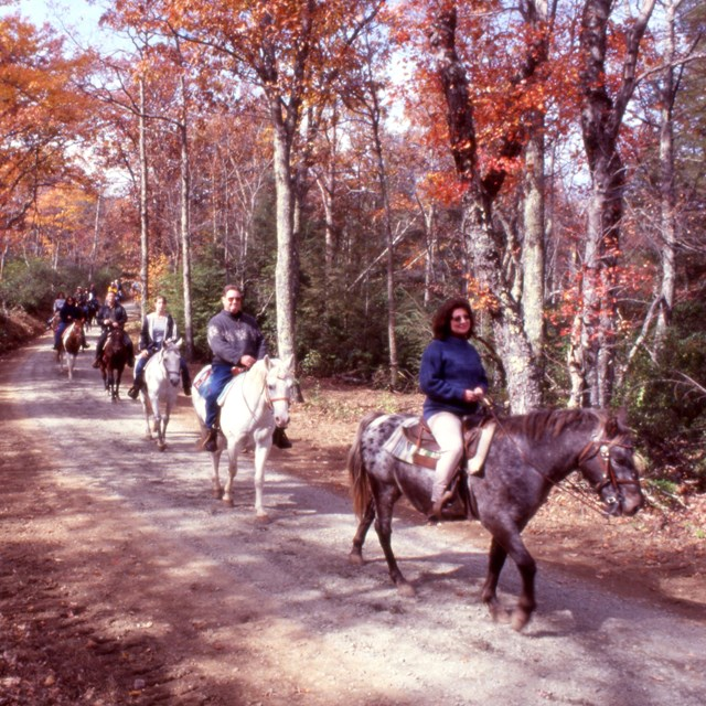 A group of people riding horses on a trail.