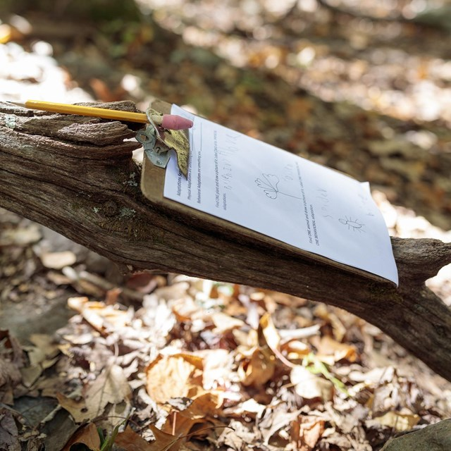 A pencil and clipboard on a branch.