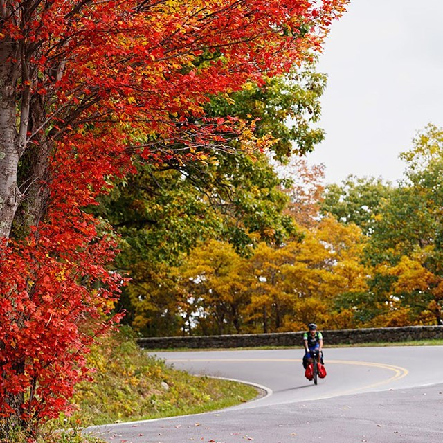 A person on a bicycle riding down a curving road surrounded by colorful fall trees.