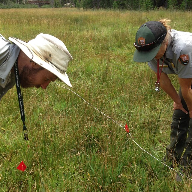 Photo of National Park Service scientists looking at wetland plants  at Devils Postpile.