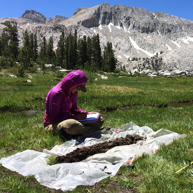 Biologist sits in green meadow with views of granite peaks, assessing a soil core profile,