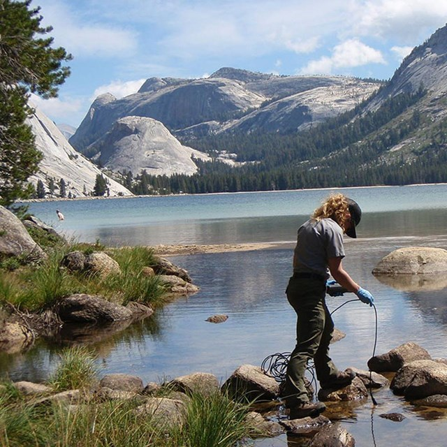 Park scientist collects water quality data at outlet of Tenaya Lake with granite domes in background