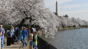 visitors at National Mall and Memorial Parks in Washington D.C.