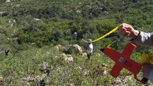 Setting up a vegetation monitoring transect