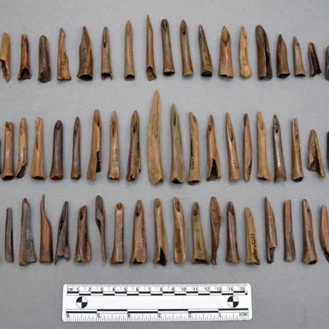 Collection of socketed bone and antler points