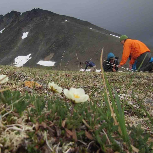 Researchers measure plant communities.