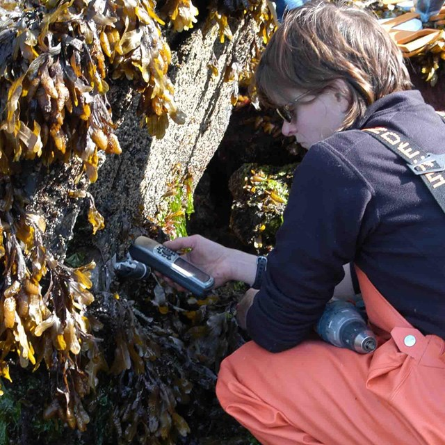 A researcher prepares instruments to measure ocean characteristics in the intertidal zone.