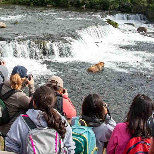 A group of visitors watch bears at the Brooks Falls platform in Katmai National Park and Preserve.