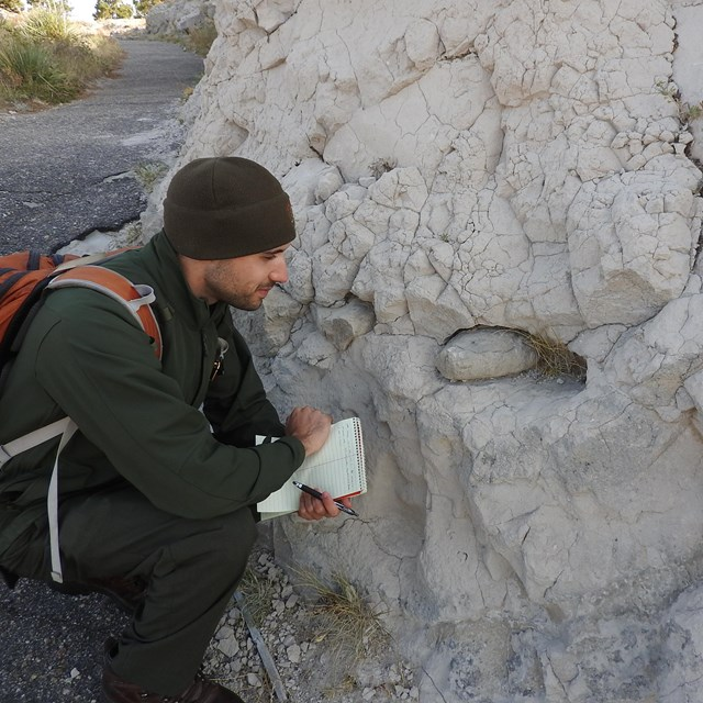 A park ranger inspects a pipy concretion that is weathering out of the surrounding sandstone.