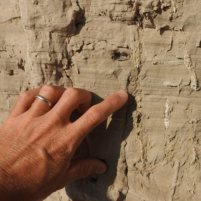 Vertical lines of light-colored material are seen surrounded by slightly darker sandstone.