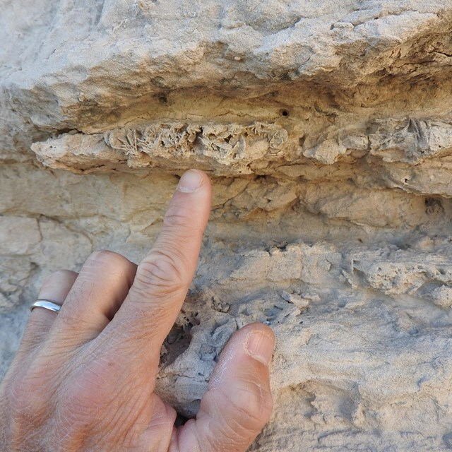 A finger points to a layer of crystals embedded in layers of sandstone.