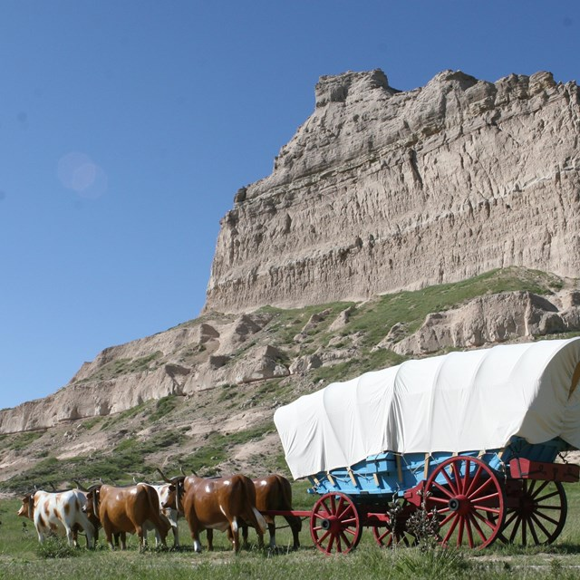 A replica Conestoga wagon is behind six replica oxen in front of a dramatic rock formation.