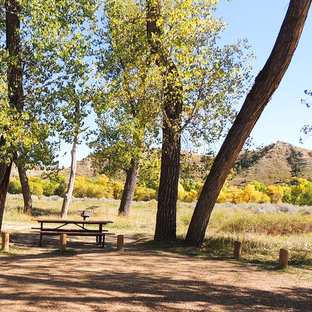 A picnic table and grill sit beneath leaning trunks of cottonwood trees.