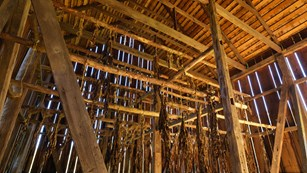Inside the tobacco barn looking at wooden rafters