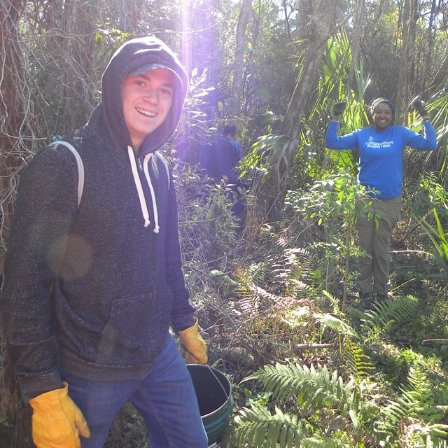 volunteers gather invasive plants