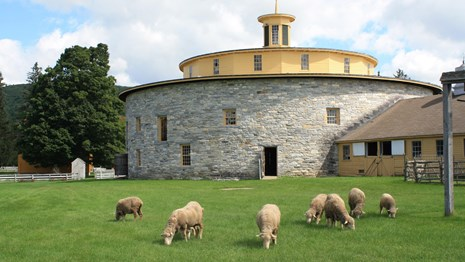 sheep grazing in front of a circular stone barn