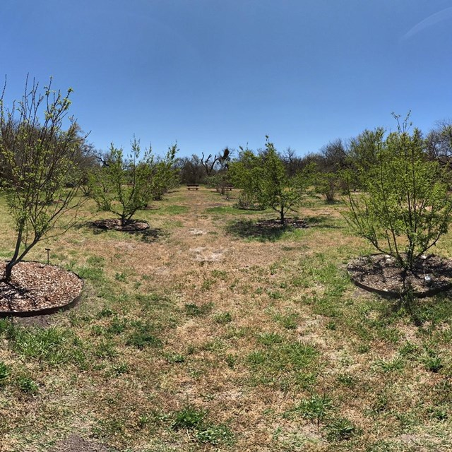 spherical panoramic photo of orchard fruit trees