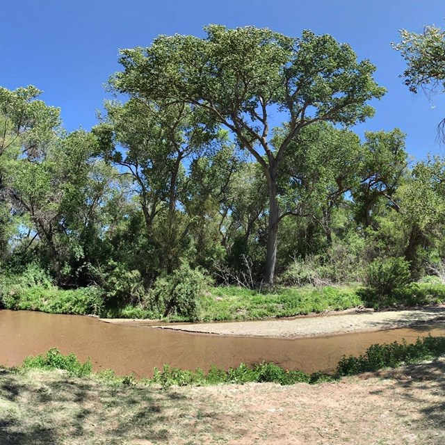 spherical panoramic photo of river with cottonwood trees