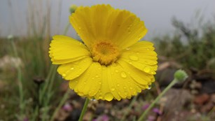 A yellow flower with raindrops on it
