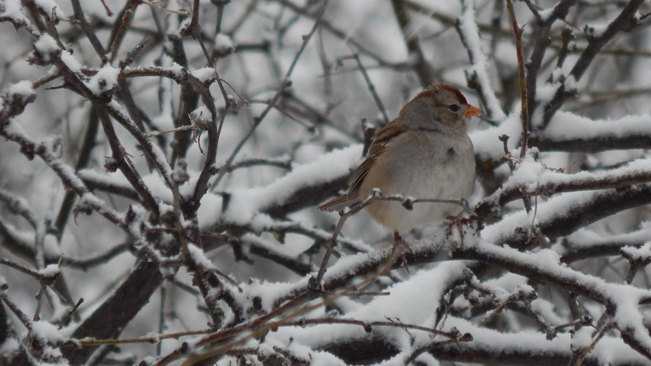 Small songbird on a snowy branch