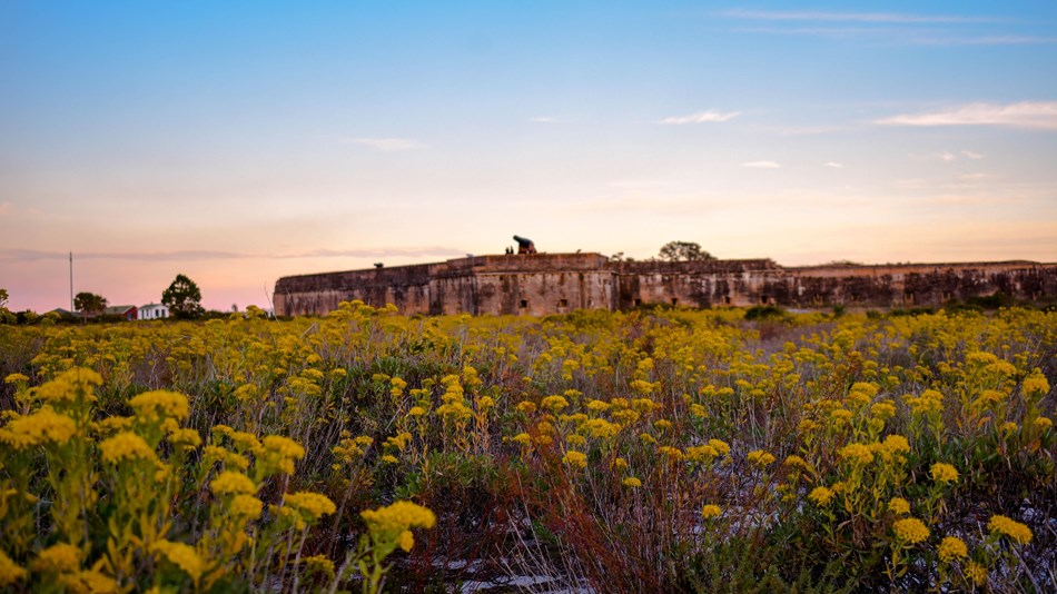 A photograph of yellow flowers outside of Fort Pickens, located in Gulf Islands National Seashore.