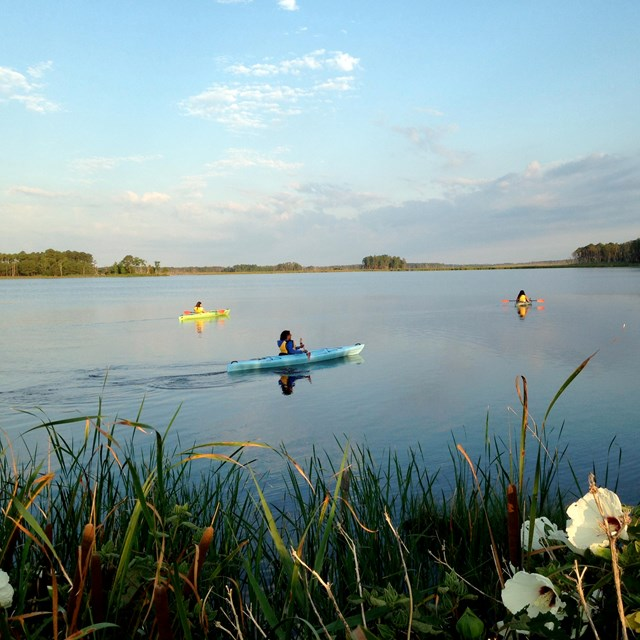Photograph of person kayaking in the Blackwater Wildlife Refuge in Maryland.