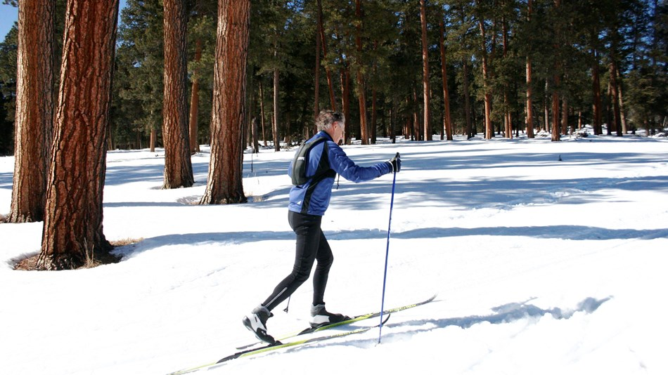 A man cross-country skiing through a forest