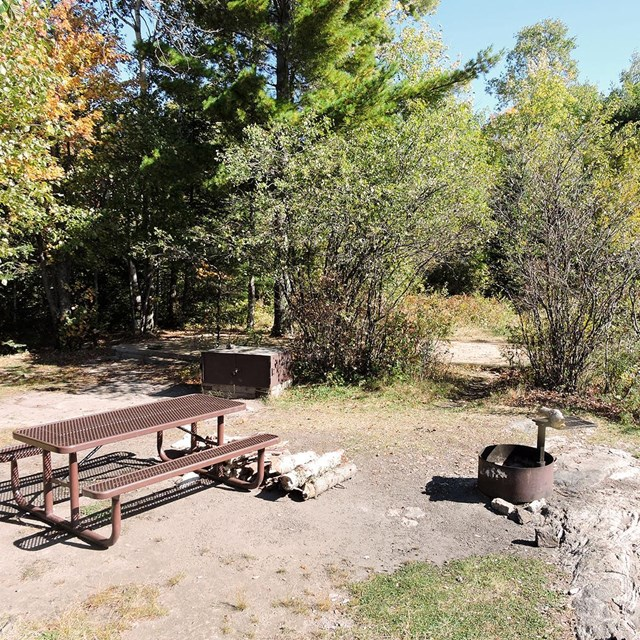 A brown picnic table, fire ring, and metal bear-proof locker sit in a clearing surrounded by trees.