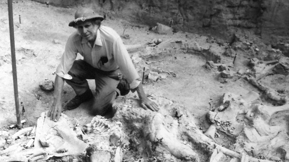 Volunteer Ralph Vinson kneels among fossils.