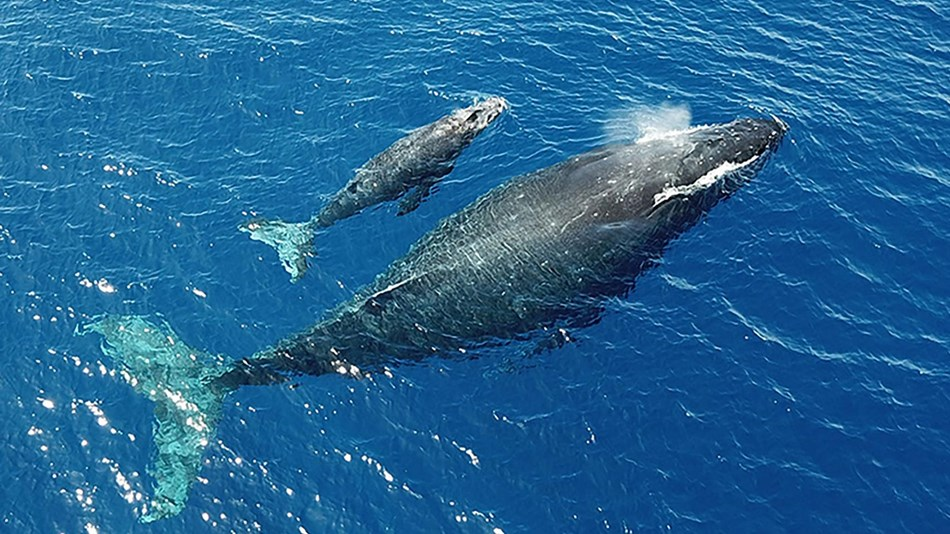 an aerial photo of a whale and calf