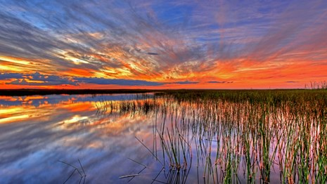 Everglades National Park at sunset.