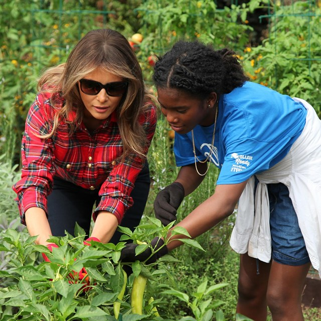 First Lady Melania Trump harvests vegetables in the garden