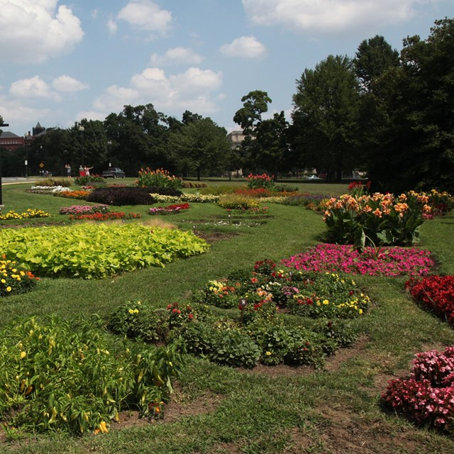 Scenic shot of flowers planted at President's Park Floral Library.