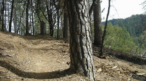 Trail through Whiskeytown woods