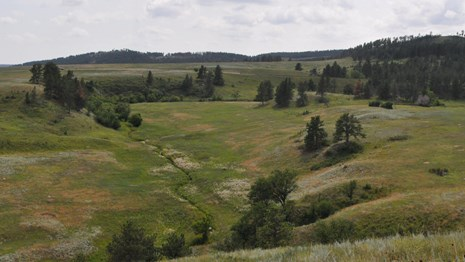 Spanning view of forest merging into prairie hills
