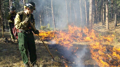 a wildland firefighter standing next to a small forest fire tamping down burning grass