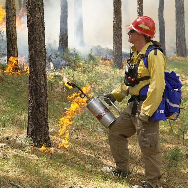 a wildland firefighter holding a drip torch next to a smoldering grass fire in the trees