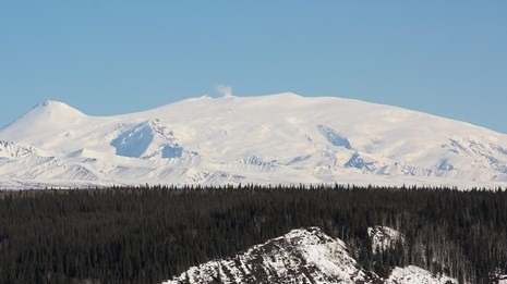 Steam rising from snowcapped Mt. Wrangell with forest in foreground.