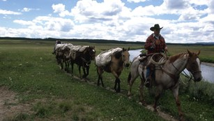 A horseback rider leads a string of horses on a trail.