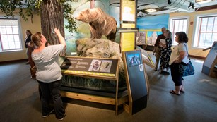 A person photographs an exhibit of a bear while other people examine other exhibits in a room.