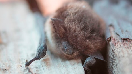 A bat rests on some wooden posts.