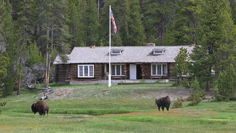 Two bison graze grass in front of a wood-log building.