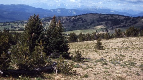 Alpine scene showing trees, grasses, and distant mountains.