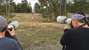 Two people take photographs of a bear using zoom lenses.
