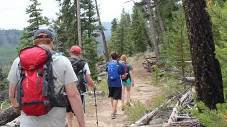 Four hikers walking along a wooded hiking trail.