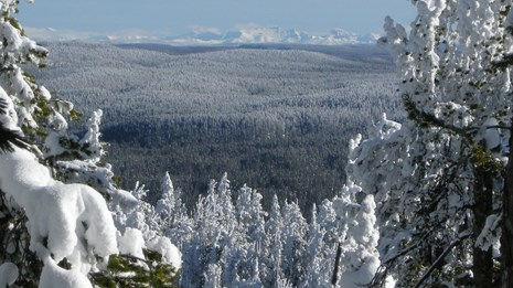 View from a hilltop looking out across a snowy forest.
