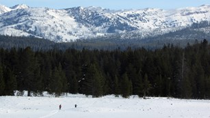Skiers crossing a snowy field with mountains in the background.