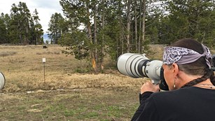 Person using telephoto lens to photograph a grizzly from a safe distance