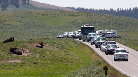 Cars, and RVs line a road winding through a valley as drivers and passengers observe bison.