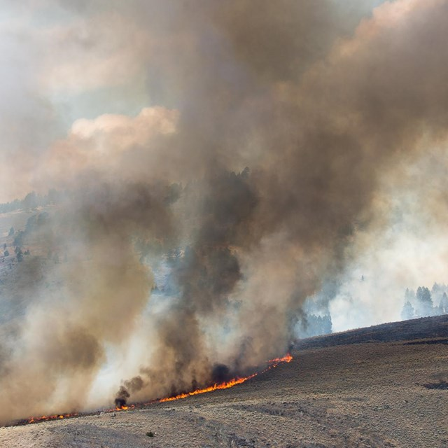 The Buffalo Fire burns through mixed sagebrush and grasses at Slough Creek